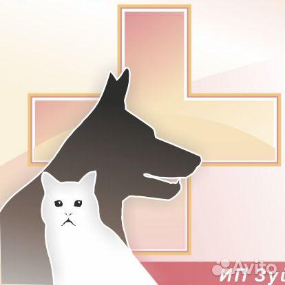 Когда вызвать ветеринарного врача домой?
