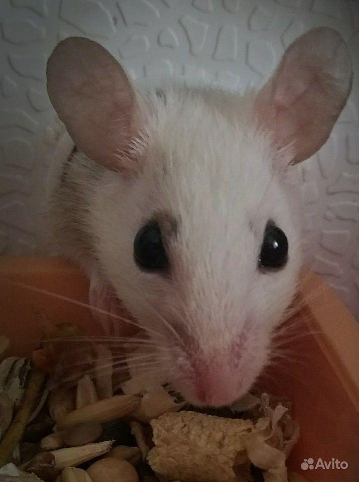 Мышь кормовая подросток 1 шт