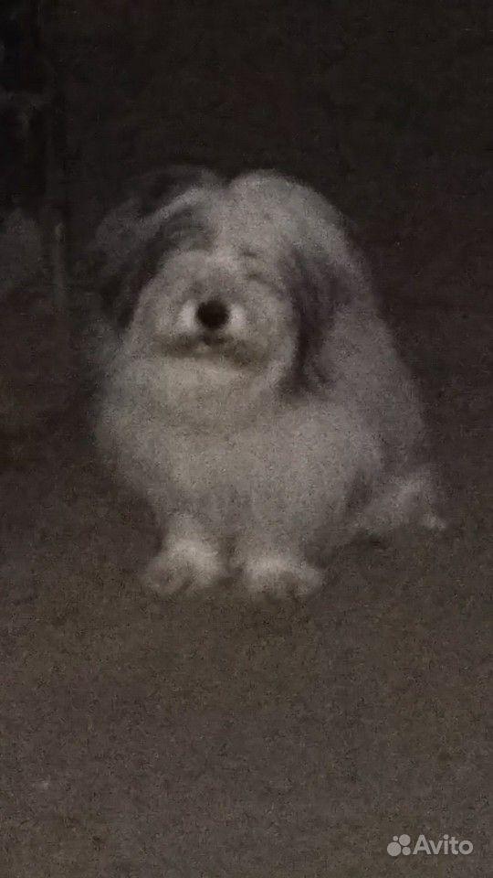 Собака (сидит у подъезда потерялась у кого то )