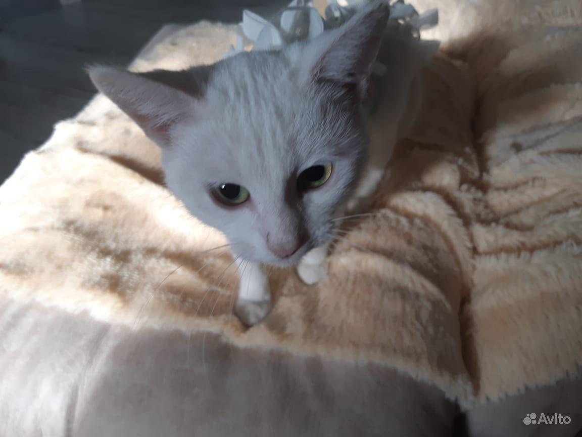 Стерлизованая кошка даром