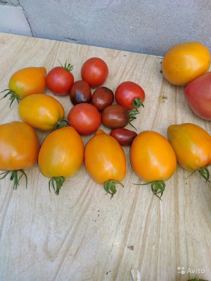 помидоры дульки фото часть