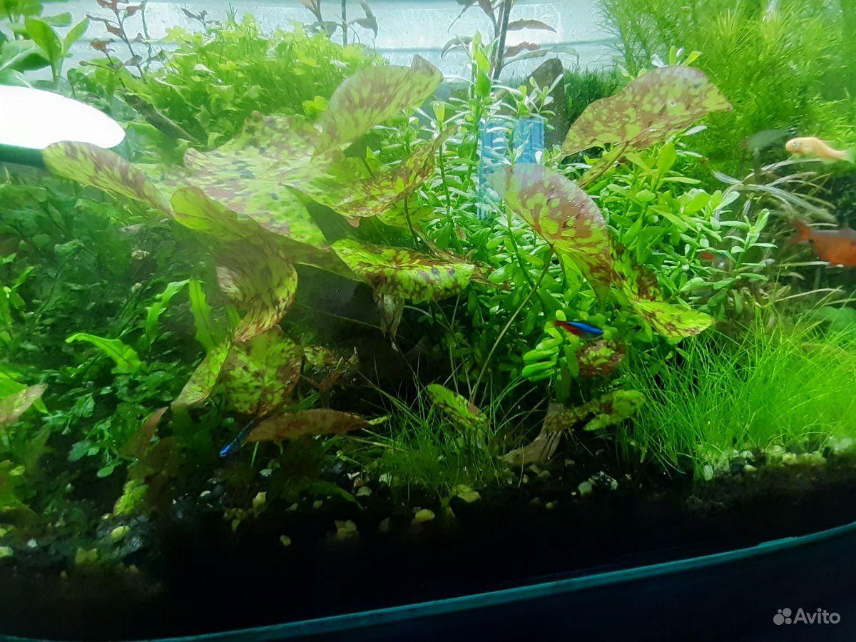 Растения для аквариума купить на Зозу.ру - фотография № 1