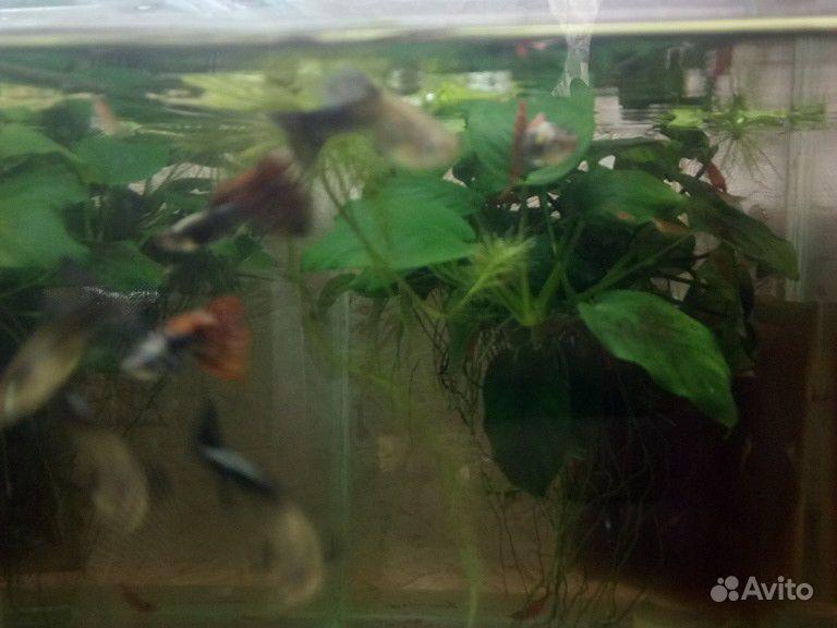 Породистая рыба купить на Зозу.ру - фотография № 8
