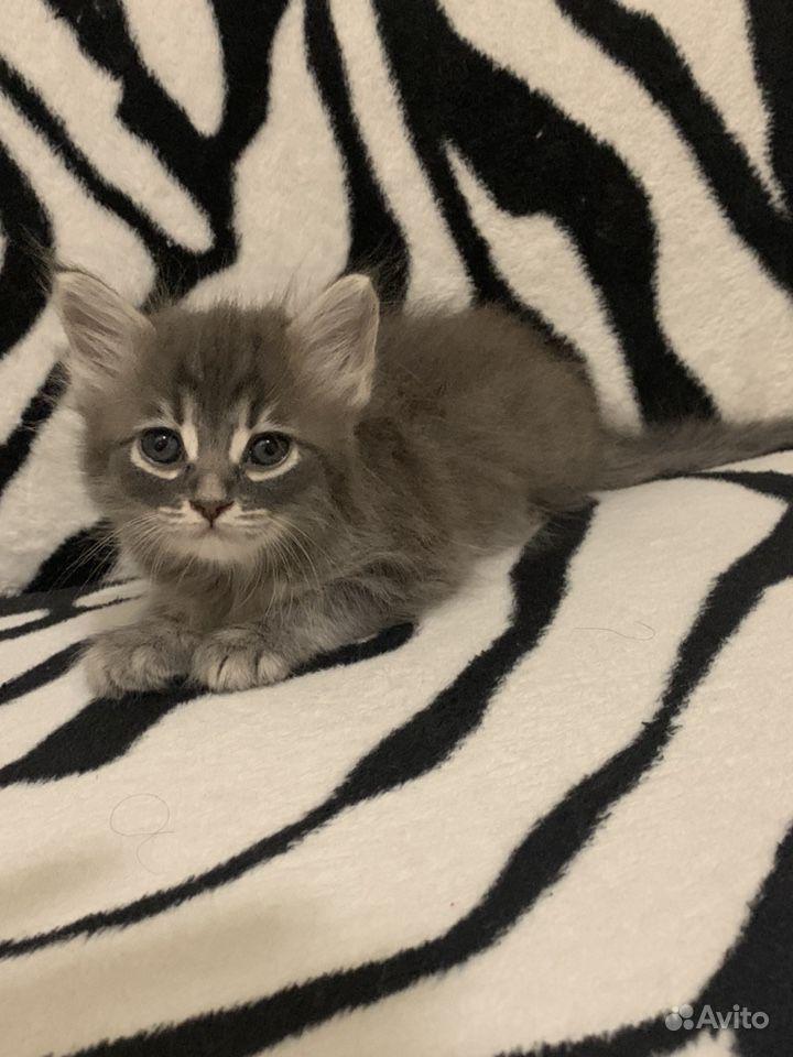 кошки в подарок ростов на дону фотографии узнать