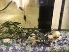 Сомы вместе с аквариумом