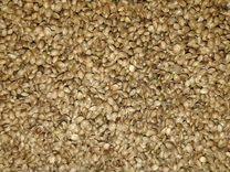 Семена конопляные объявление политик марихуана выращивал