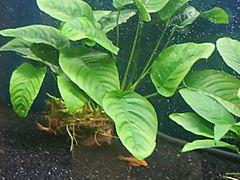 Экогрунт аквариумный