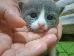 Малыши котятки