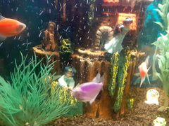 Готовый аквариум с жильцами