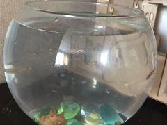 Рыбки с аквариумом