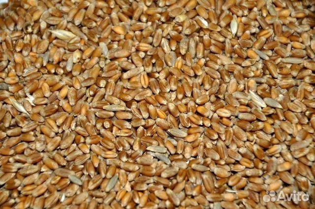 Подать объявление о продаже зерна дать объявление о частном займе