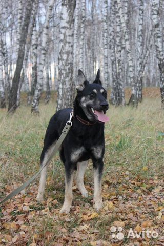 Собака Максик в добрые руки купить на Зозу.ру - фотография № 1
