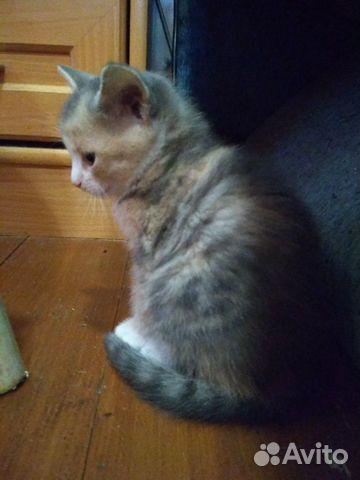 Котята от кошки мышеловки  89201645350 купить 3