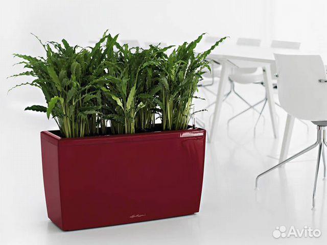 работа специалист по уходу за растениями