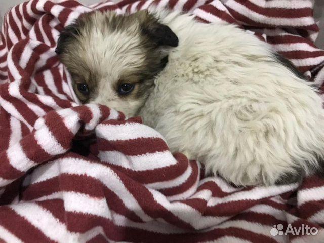 Little puppy girl