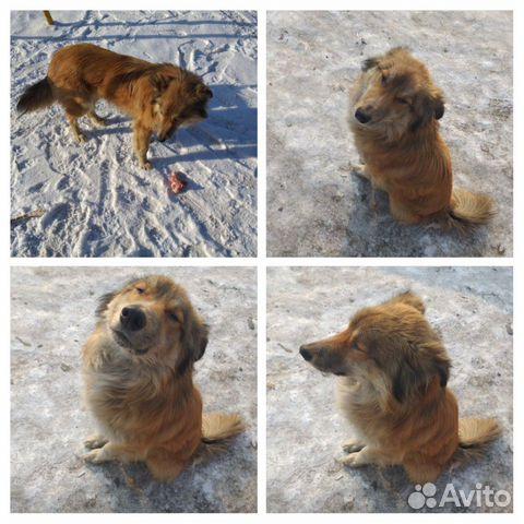 Собачка ищет хозяина 89235950773 купить 1