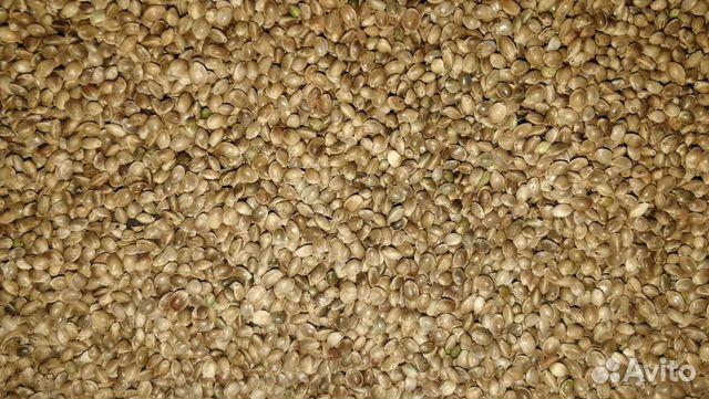 Семена конопли купить ростов реферат на тему конопля