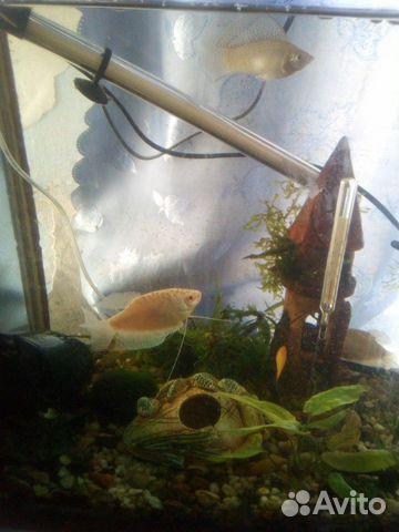 Продам аквариум 89788263387 купить 2