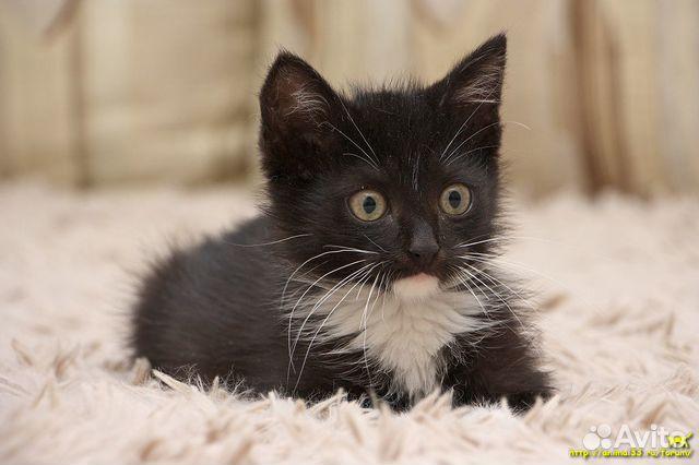 Котята ищут дом 89515756829 купить 2