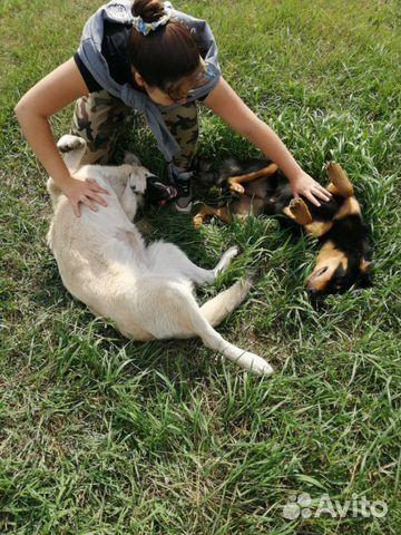 Собаки в добрые руки  89603982453 купить 5
