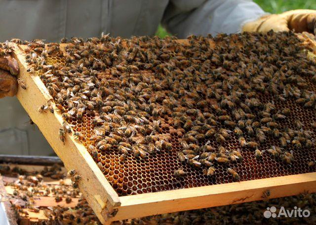 Пчелосемьи  89209374747 купить 1