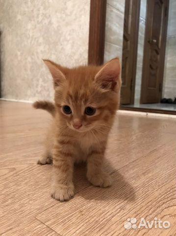 Котенок  89640694218 купить 5