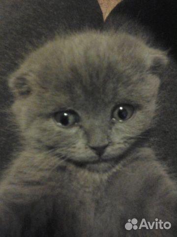 Отдам кота  89109182716 купить 1