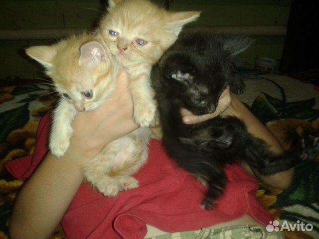 Котята в добрые руки  89649949065 купить 1