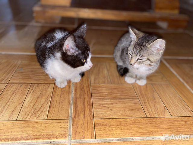 Два котенка  89859349872 купить 2