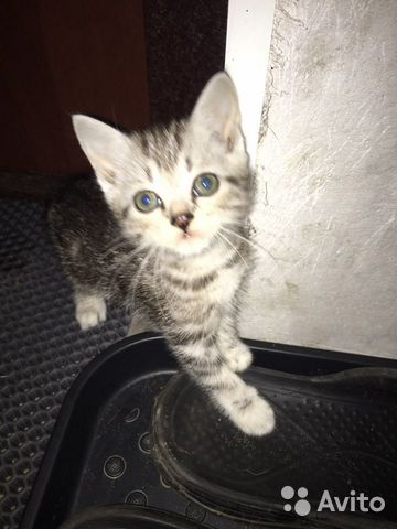 Котята в добрые руки даром  89833975530 купить 4