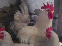 Яйцо гусей инкубационное,породная птица,яйцо
