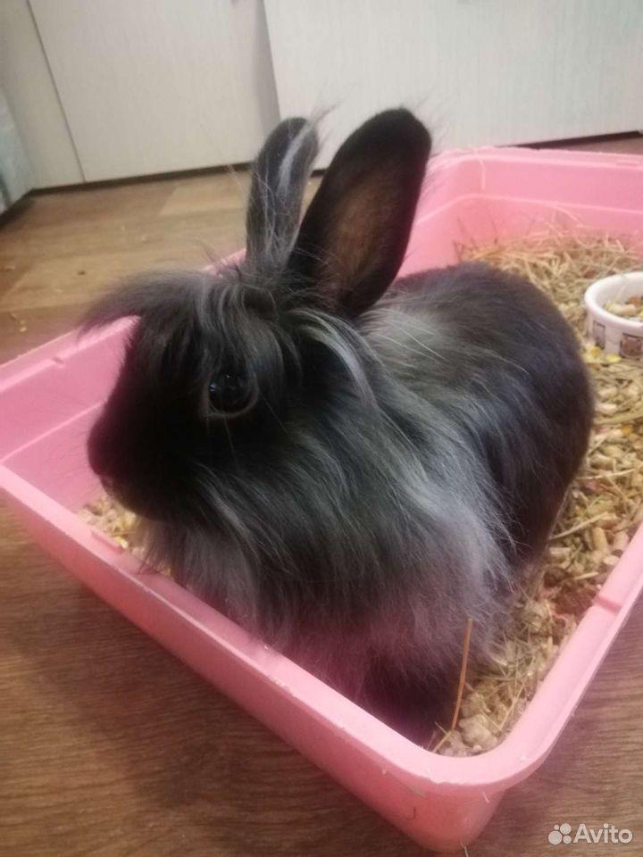 Кролик декоративный  89232499255 купить 2