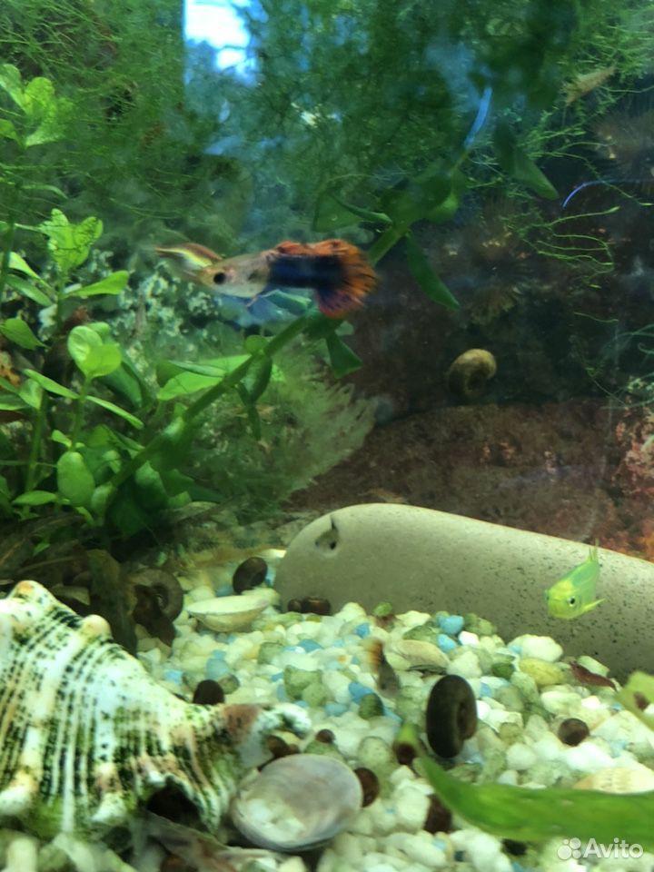 Аквариумные растения рыбы  89207067141 купить 8