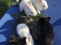 Крольчата для фотосессии