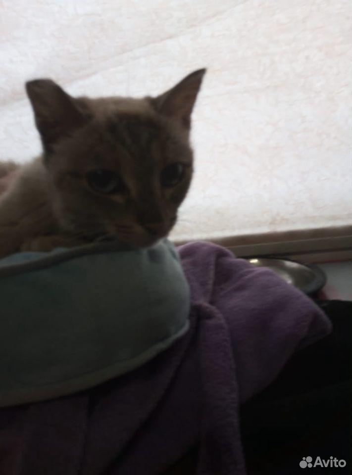 Кошка  89049940246 купить 1