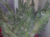 Комнатные растения и отростки