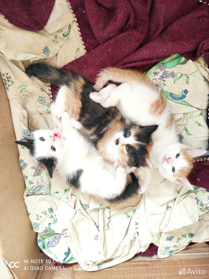 Котята в добрые руки  89011218595 купить 2