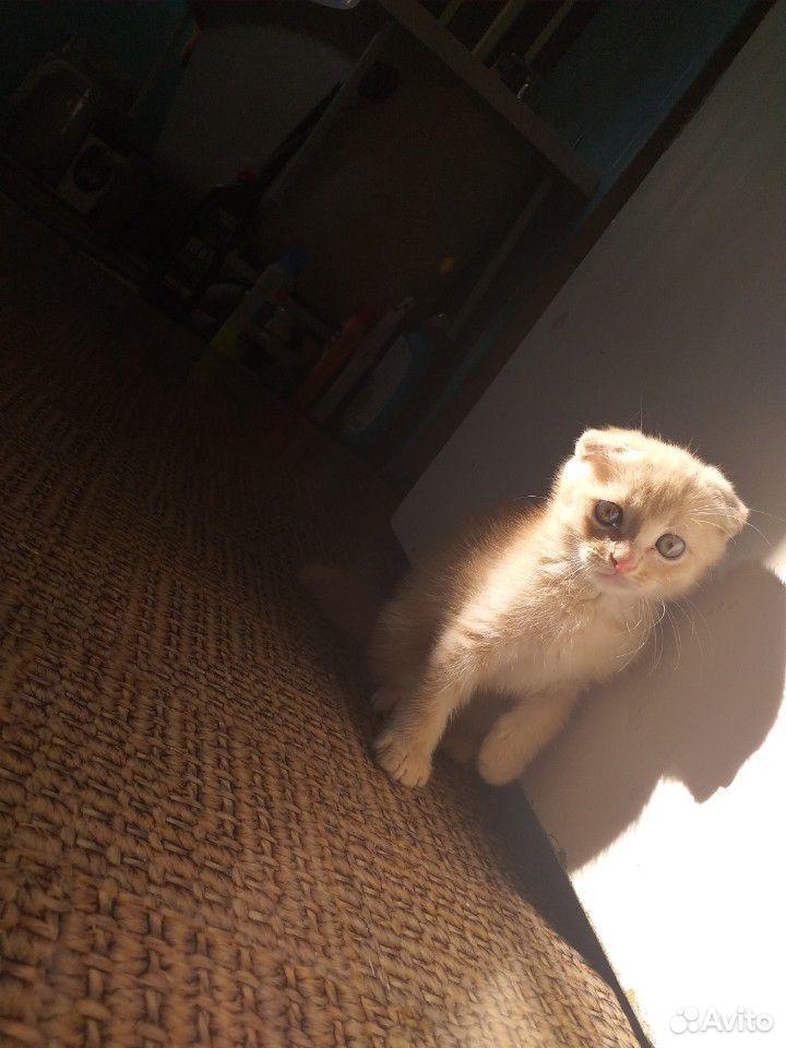 Продаю котят  89228220557 купить 8